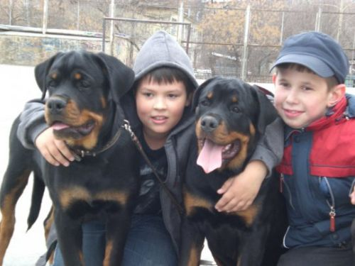 Is The Rottweiler A Good Family Dog Breed?