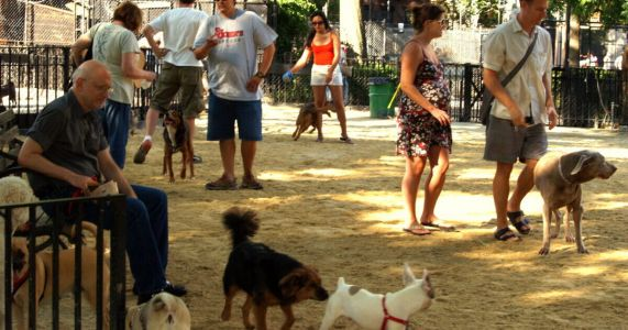 Residents To Choose From Several Exciting Features For Innovative New Dog Park