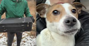 Abandoned Dog Rescued From Suitcase Tossed In Snowy Park