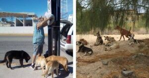 Couple Takes Action To Feed City's Stray Dogs