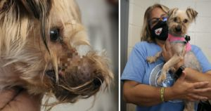Heartbroken Dog Found With Metal Wire Clamping Her Mouth Shut