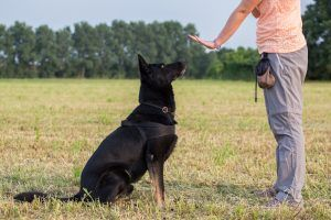 Why I'm Not a Purely Positive Dog Trainer