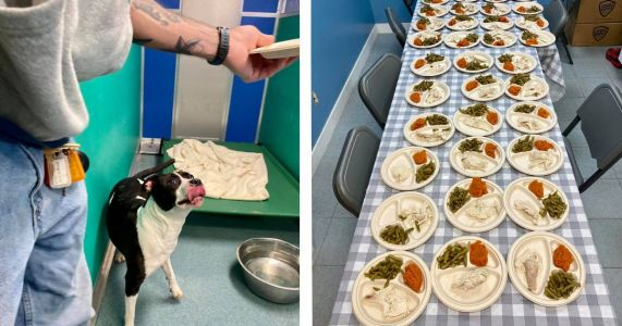 Couple Cooks Special Thanksgiving Meal For Nearly 80 Shelter Dogs