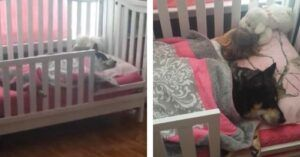 Mom Checks On Sleeping Baby To Find Their Rescue Dog Cuddling At Her Side