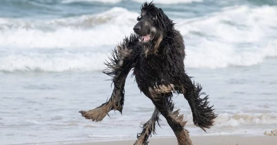 21 Dogs That Seem To Be Malfunctioning
