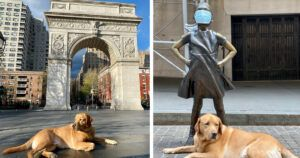 With NYC Mostly Closed, Dog Has Tourist Spots To Himself