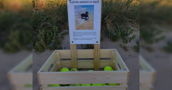 Beach Memorial For Deceased Dog Provides Tennis Balls For Other Pups
