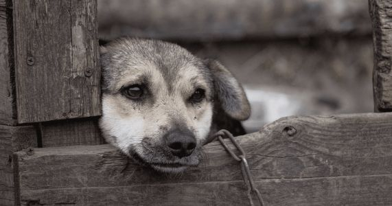 Neglect Is Animal Abuse: Look Out For These Signs Of Neglect