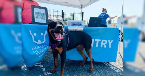 """This DC """"Pet Pantry"""" Helps Food Insecure Families Feed Their Animals"""