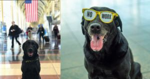 TSA Canine Has Epic Last Bag Search Before Retirement