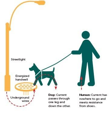 Seattle City Light's Response to Death of Dog Killed by Contact Voltage is Ridiculous