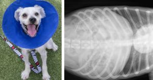 Experts Urge Proper Mask Disposal After Dog Nearly Dies Eating One