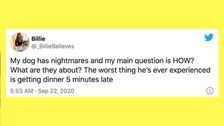 31 Of The Funniest Tweets About Cats And Dogs This Week