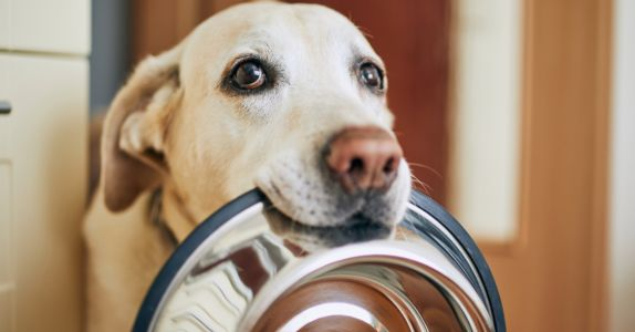 """This $12 """"Kibble Booster"""" from Amazon Prime Will Help Your Dog Feel Fuller Longer AND Boost Their Nutrition"""
