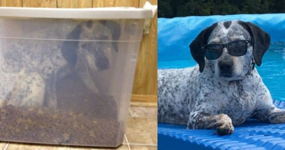 Silly Dog Doodle Sneaks Into Her Food Container For Snack Shenanigans