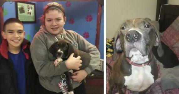 Animal Rescue Refuses To Return Lost Dog To Family