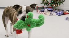 Shelter Dogs Pick Out Their Own Christmas Presents In Heart-Meltingly Cute Videos