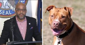 BREAKING NEWS: Denver Mayor Overturns New Law Allowing Pit Bulls