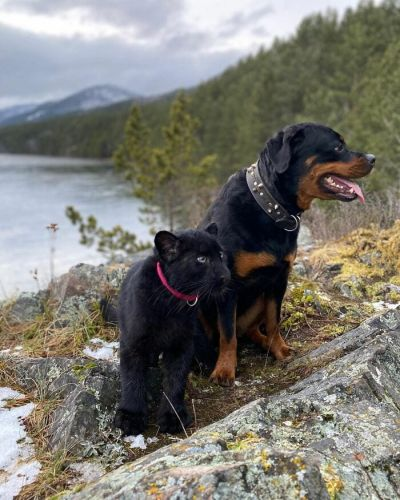 6 Ways to Have Fun with Your Rottweiler