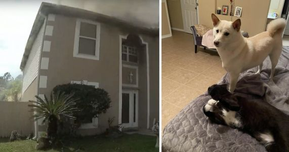 Officer Smashes Door, Inhales Smoke To Save Dog From Fire