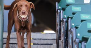 """Teal The """"Foul Ball Dog"""" Is The Real MVP Of Minor League Ball"""