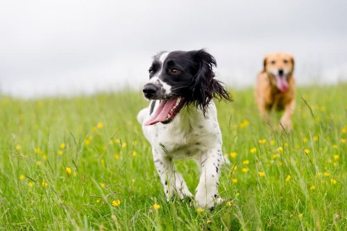 8 Symptoms You Shouldn't Ignore in Active Dogs