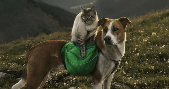 Rescue Dog Carries Adventurous Cat Sibling During Hiking Trips