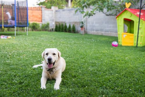Is Your Yard Safe for Your Dog?