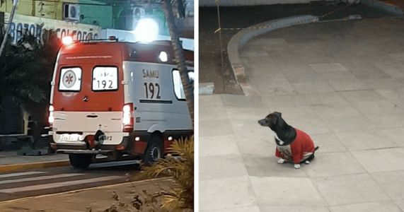 Loyal Dog Follows Ambulance To The Hospital To See Her Dad