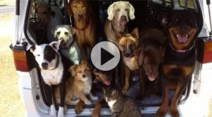 Truckload Of Dogs Has The Time Of Their Life At The Beach!