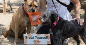 Marketing Goes To The Dogs With Sniffable Mini Billboards