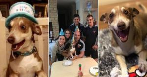 Smiling Dog's Adorable 13th Birthday Celebration Goes Viral