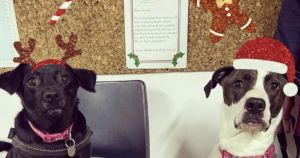 UK Shelter Dogs Write Letters To Santa Begging For Forever Homes