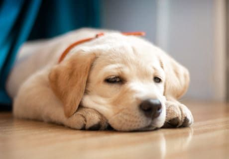 What To Do If Your Puppy Gets Motion Sickness