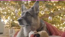 Joe Biden's Dogs, Champ And Major, Star In A Rockin' Christmas Video