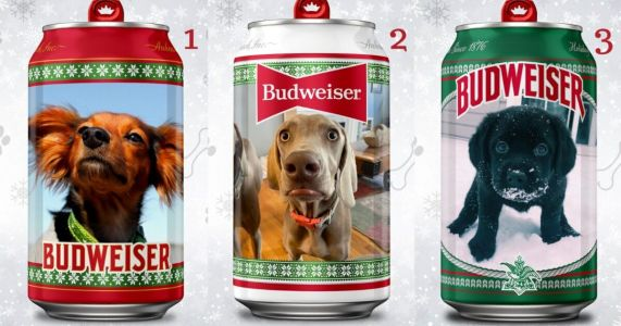 Budweiser Could Feature Your Dog's Picture On A Can!