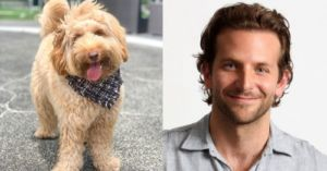 Bradley Cooper And His Doodle Dog Are Enough To Make Hearts Explode