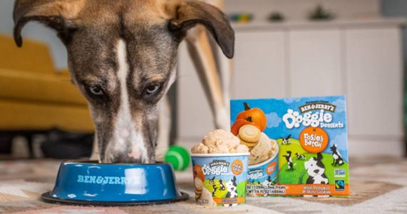 Ben & Jerry's Presents Delicious Frozen Dessert Cups For Your Pup