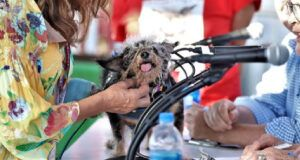 """""""World's Ugliest Dog"""" Competition Celebrates Adorable Rescue, Senior Pups And Their Stories"""