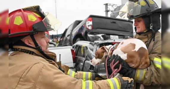 Multiple Dogs Rescued From Deadly Pileup In Fort Worth, Texas