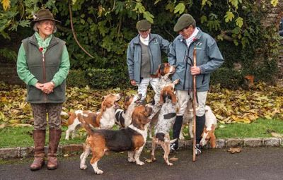 Basset Hounds 2019: a new low?