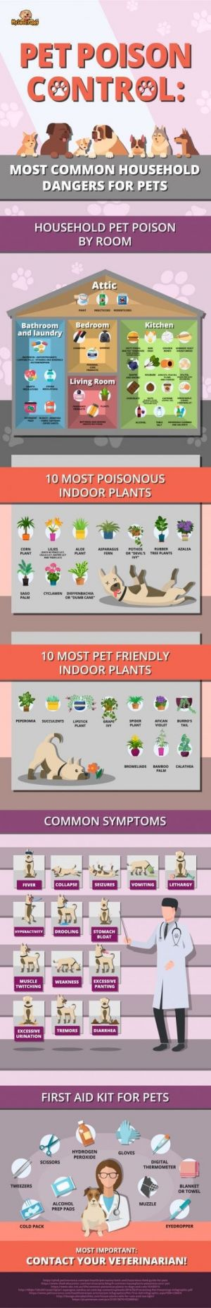 Improve your dog's diet to avoid common health conditions: 3 homemade food ideas