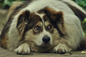 Dogs Suffer as More Are Abused Online, And Justice is Never Served
