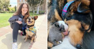 Dog Surprises Her Foster Mom With Litter Of Puppies During Midterms