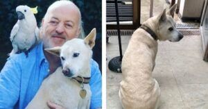Strictly's Star Bill Bailey Says Heartfelt Goodbye To Rescue Dog, Banjar