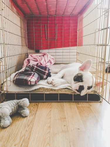 Calm Your Dog's Separation Anxiety
