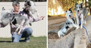 Border Collies Break Record For Most Tricks In One Minute