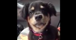 Puppy Throws Fit About Being Refused Lap Time