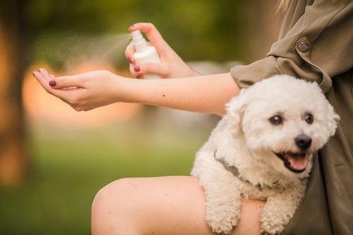 Is Hand Sanitizer Safe For Dogs?
