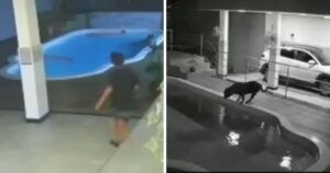 Courageous 11-Year-Old Leaps Into Pool To Save His Dog From Drowning